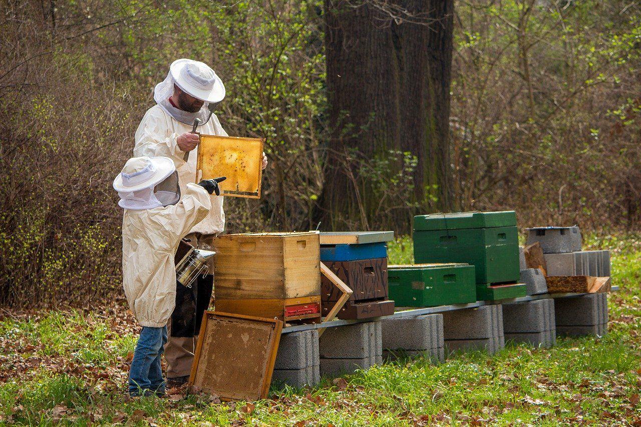 Suis-je fait pour devenir apiculteur